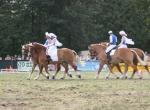 Pferdestark 2013 Viertal II.jpg