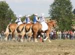 Pferdestark 2013 Viertal III.jpg